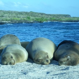 How to Plan a Trip to the Galapagos Islands