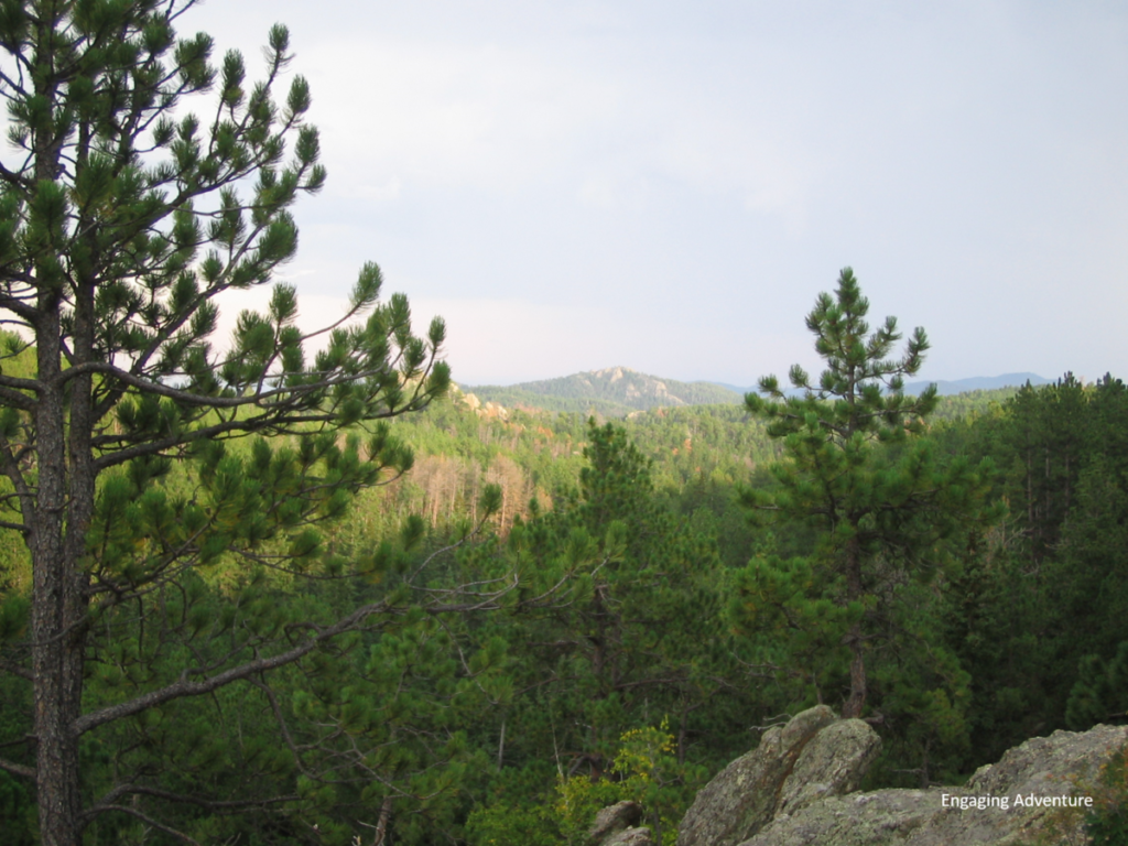 black hills south dakota north dakota forest national park nature wilderness pine trees